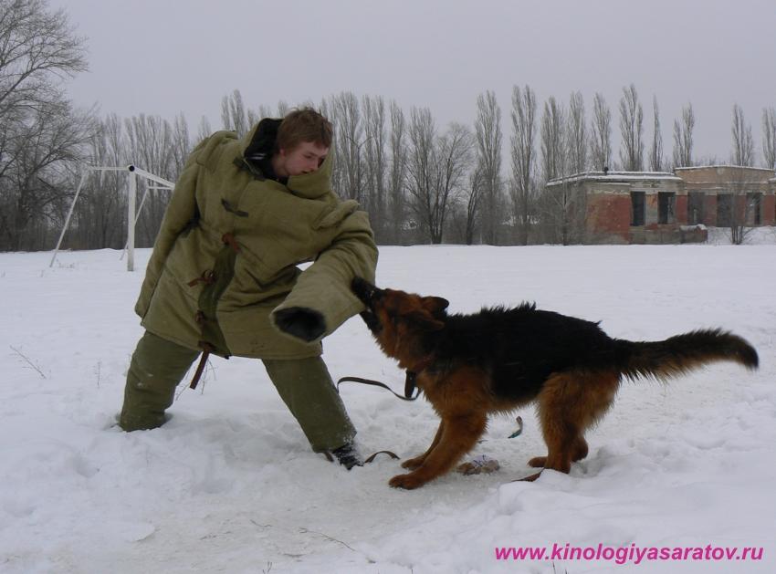 Костюм для дрессировки собак