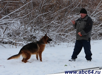 Купить породистого щенка немецкой овчарки в Саратовской области
