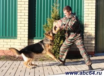 Где дрессировать собаку в Саратове. Центр подготовки и дрессировки собак. Кинологи дрессируют собак